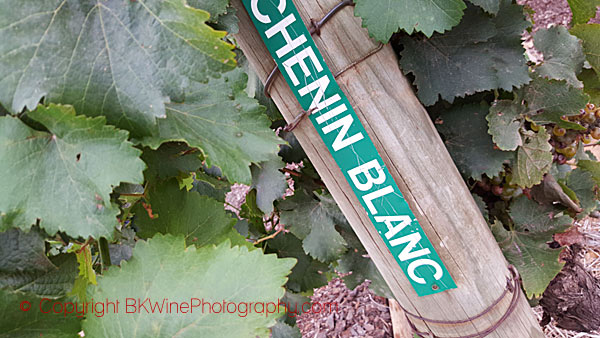 Buy chenin blanc to drink or to age