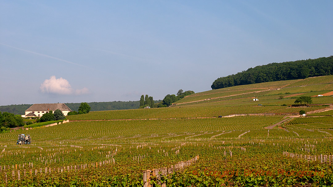 Vineyards on the Corton hill, Aloxe-Corton, Burgundy