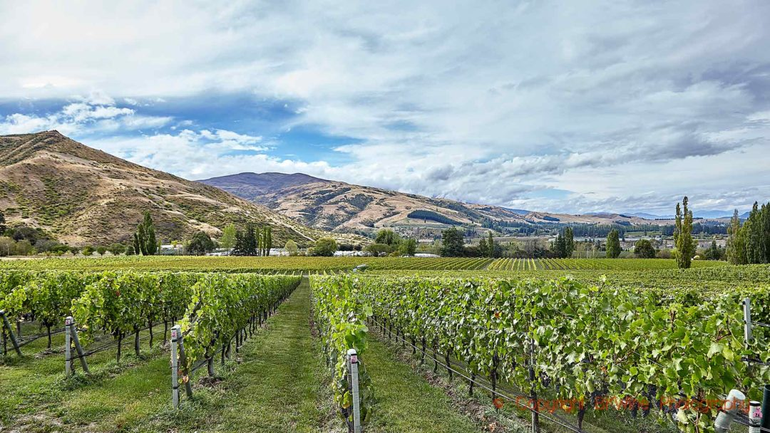 Vineyards at Felton Road Wines in Bannockburn, Central Otago, New Zealand